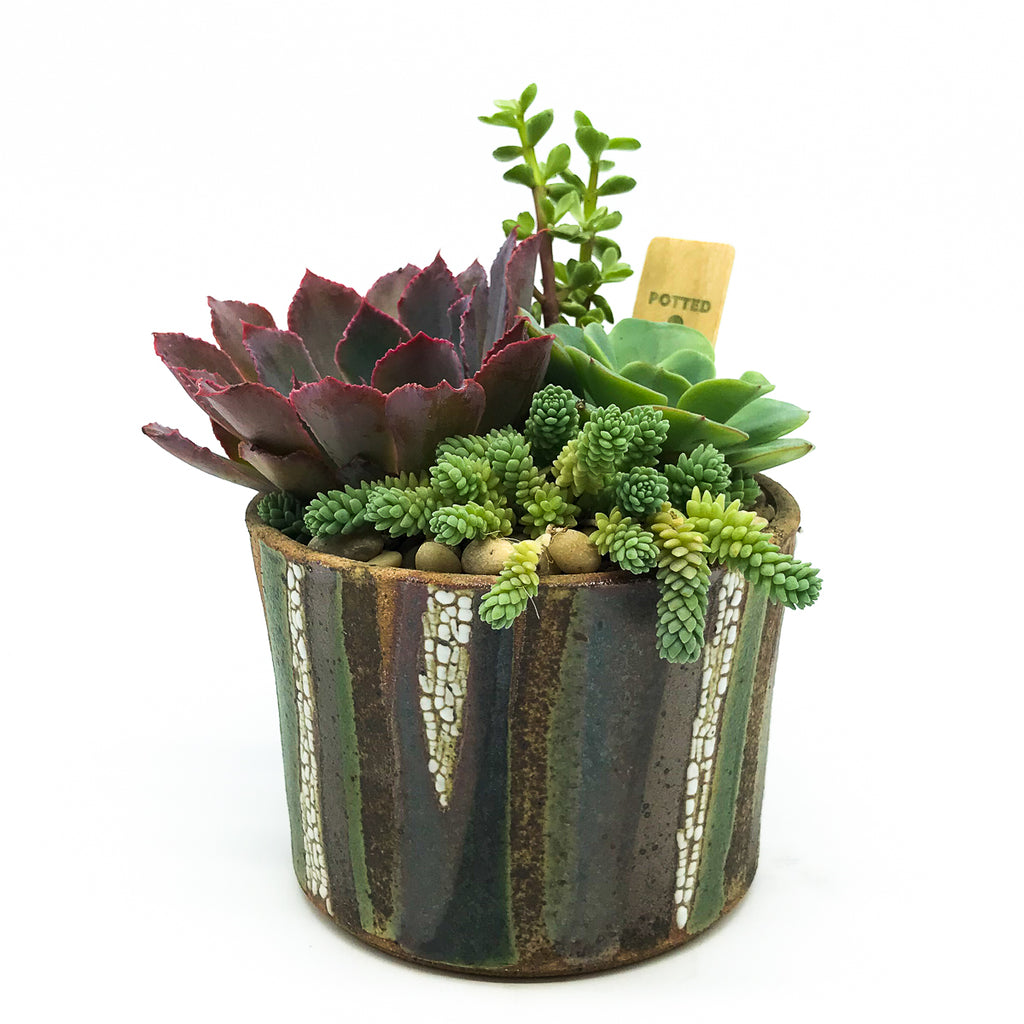 June Ceramics in Forest Series with assorted succulents
