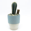 Robyn Pot with a cactus