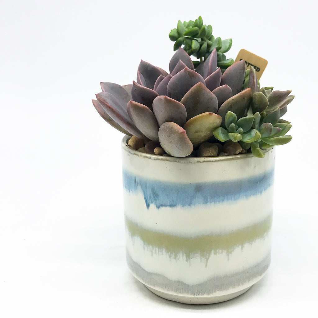 Glazed striped pot with assorted succulents