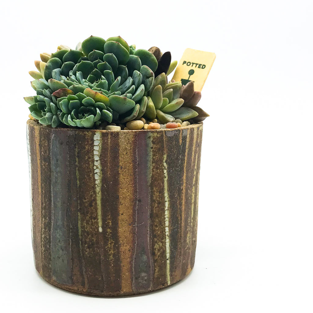 June Ceramics pot with assorted succulents