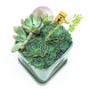 Svek Cube Planter with assorted succulents
