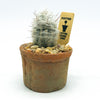 Small Egyptian planter with a cactus