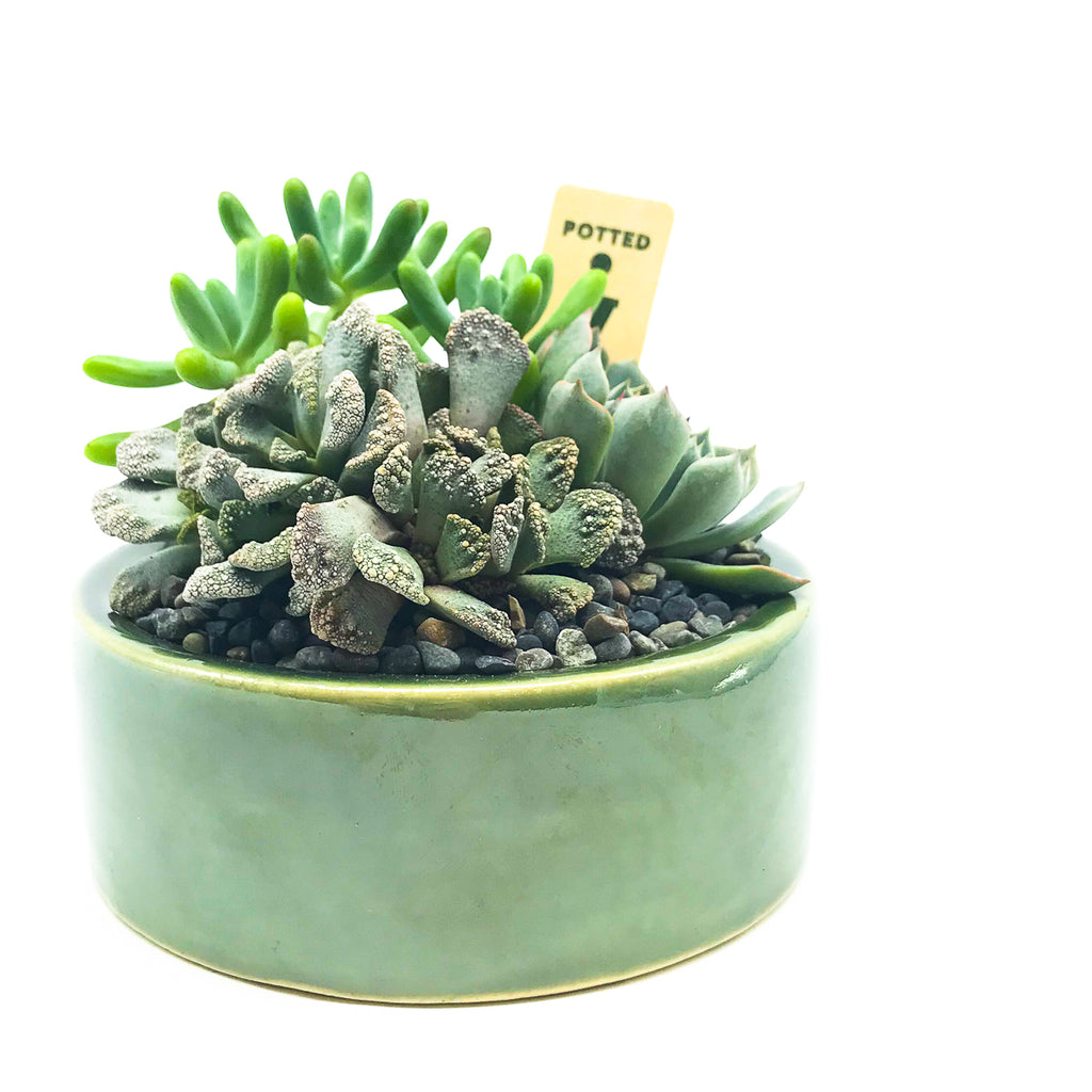 Green circular planter with concrete leaf and assorted succulents