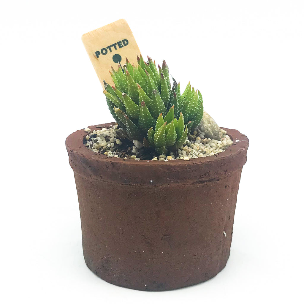 Small Egyptian planter with a succulent