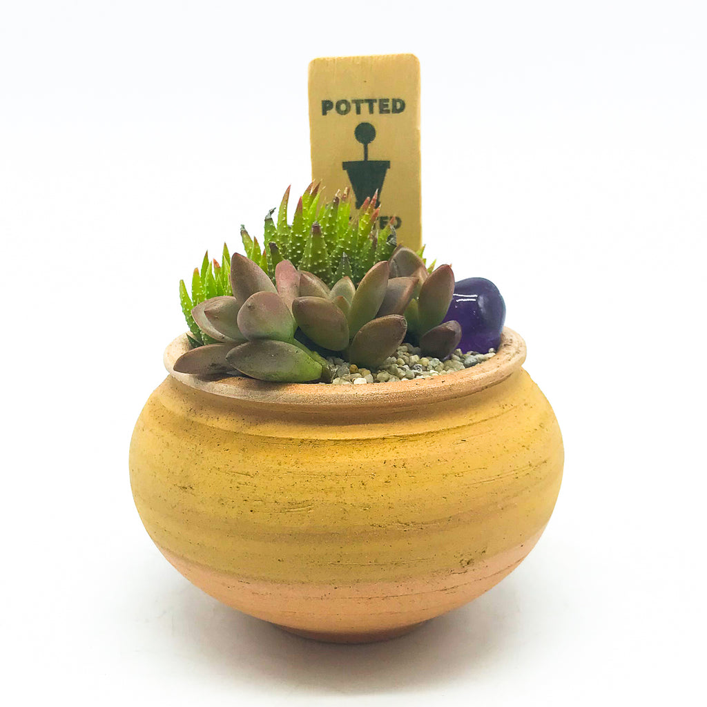 Small terra-cotta planter with assorted succulents