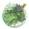 Glazed turquoise planter with assorted succulents