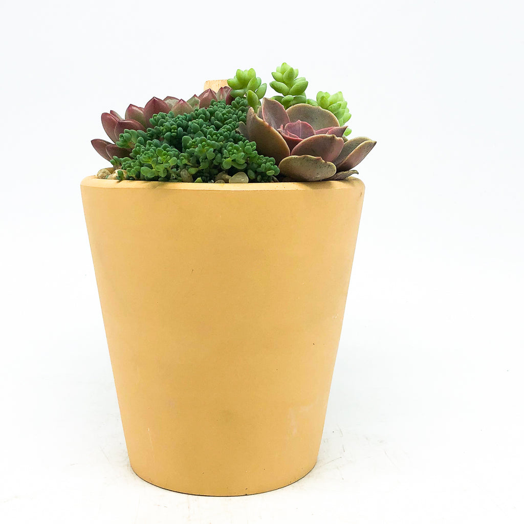 Terra-cotta pot with assorted succulents