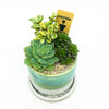 Green and cement Minute Planter with assorted succulents