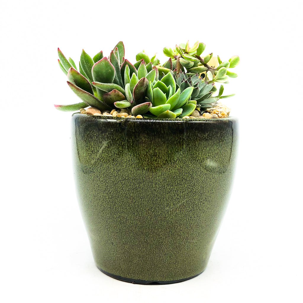 Green glazed Egg Pot with assorted succulents