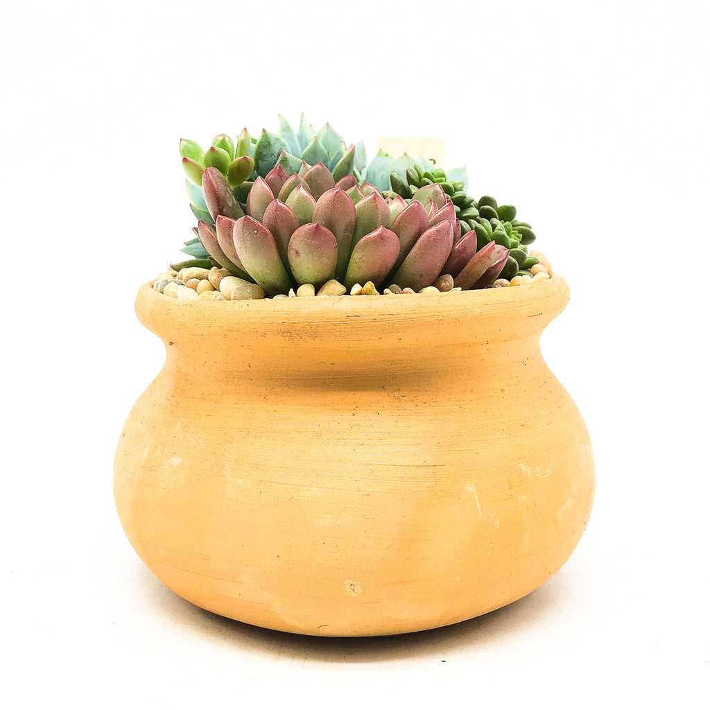 Medium terra-cotta planter with assorted succulents