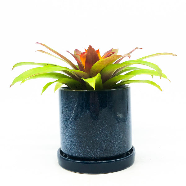 Minute Planter with Saucer - Cosmo Blue
