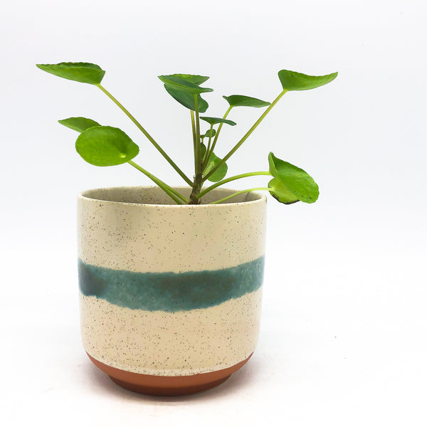 Mateo Pot with pilea