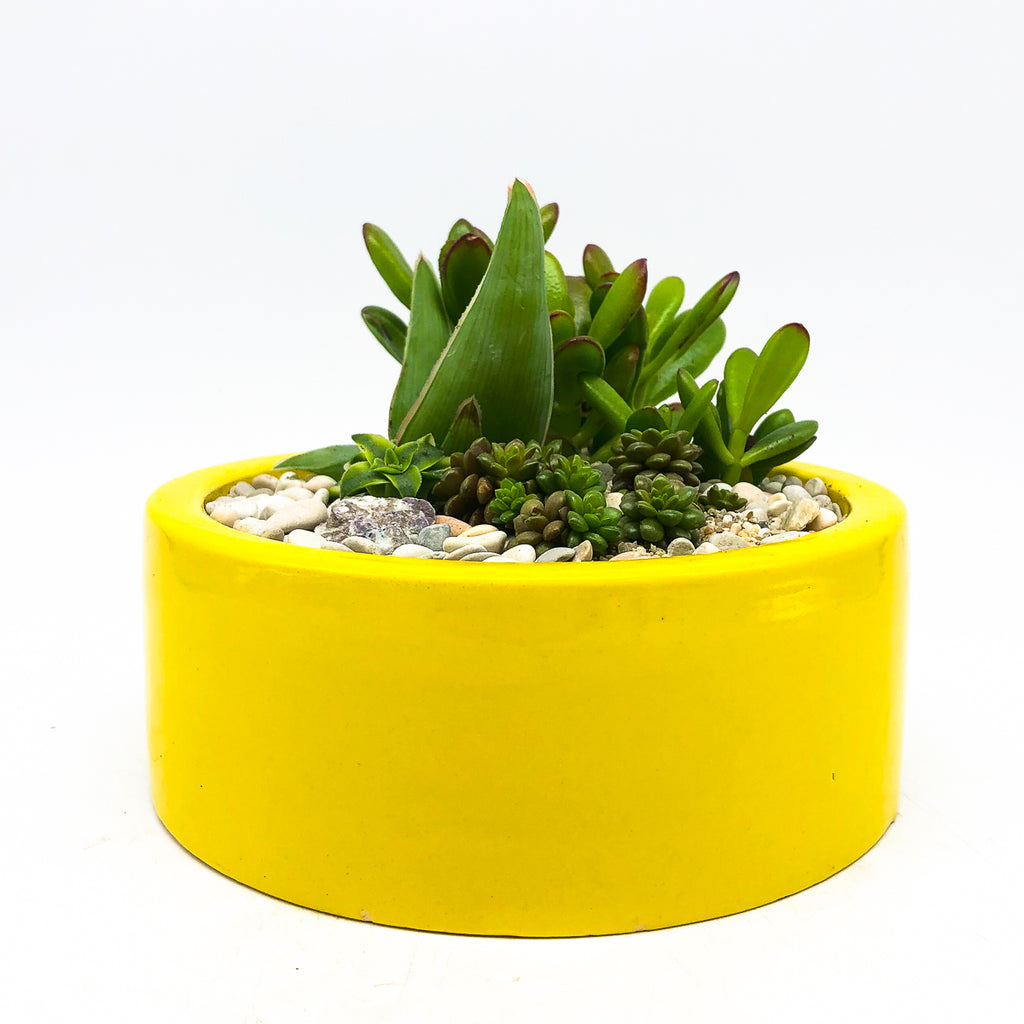 Round yellow planter with assorted succulents