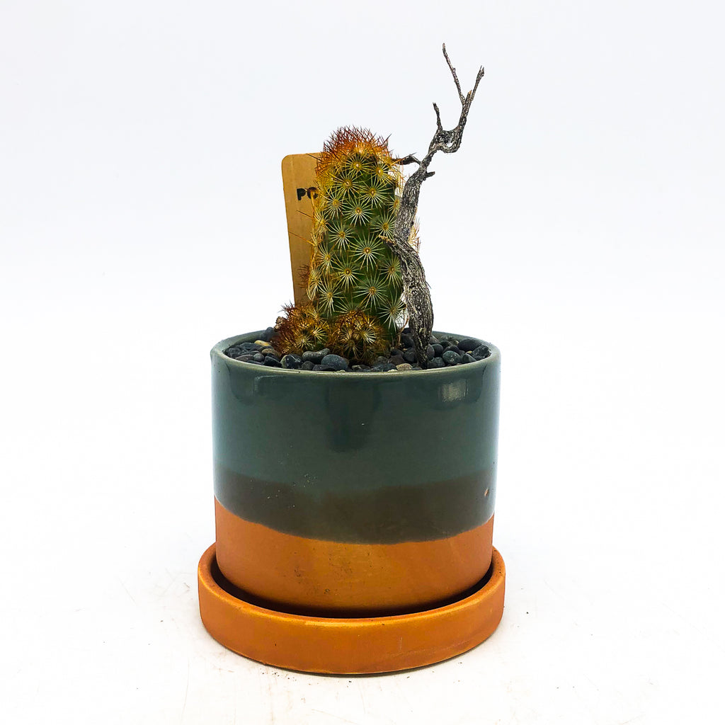Minute planter in grey/terra-cotta with a cactus and tree branch