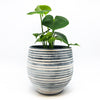 Stoneware Soft White Crackle Pot with monstera deliciosa