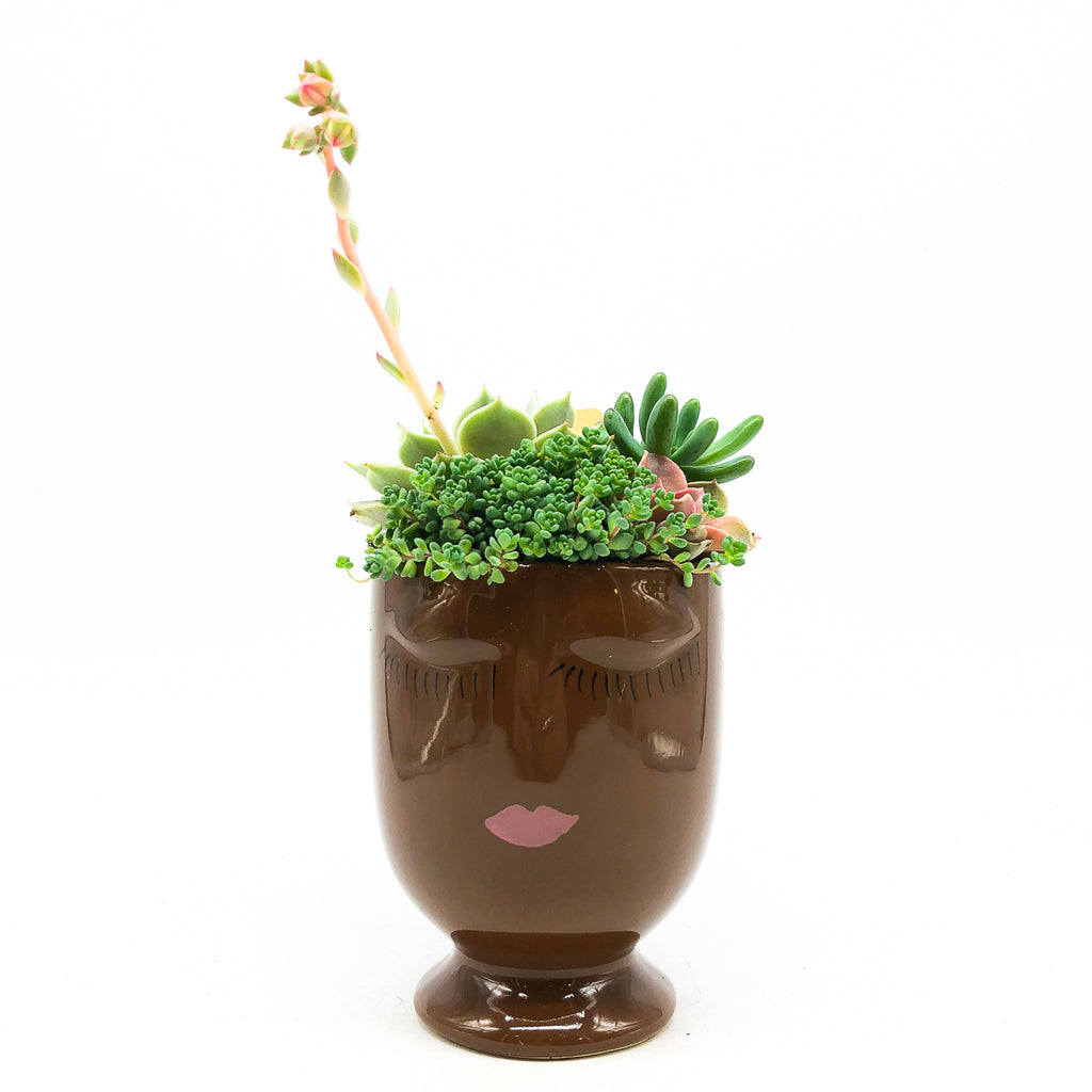 Large chocolate Celfie Face planter with assorted succulents
