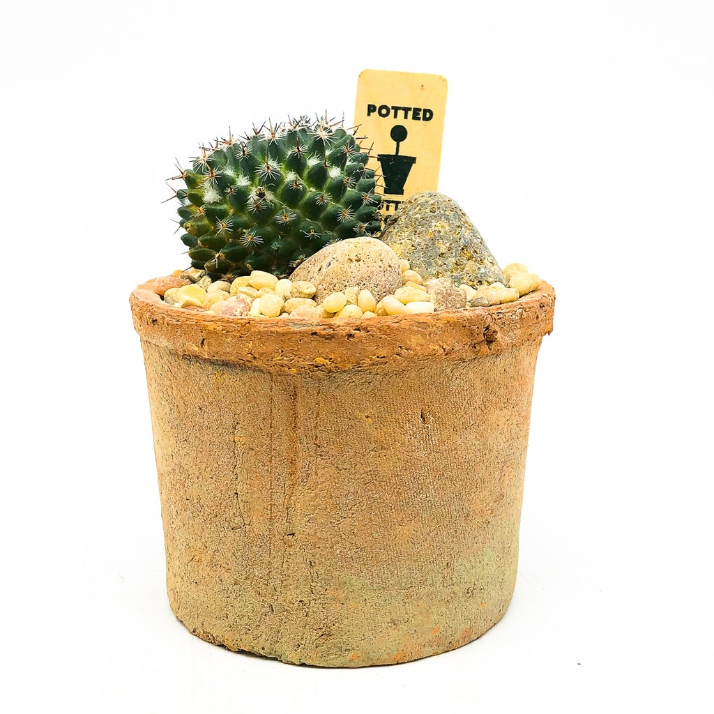 Small terra-cotta planter with a cactus