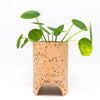 Capra Archie Planter  in salt with a pilea