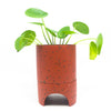 Capra Archie Planter in terra-cotta with pilea