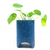 Capra Archie Planter in neptune with pilea