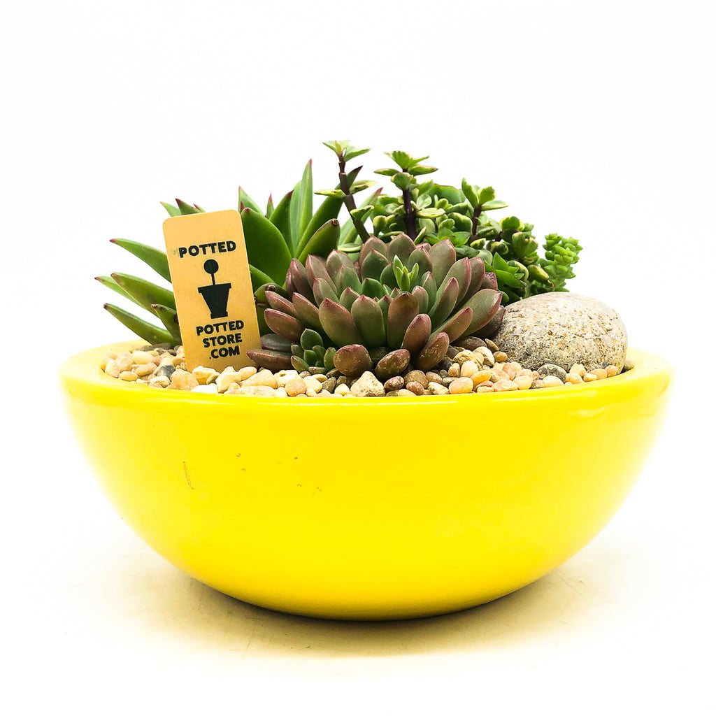 Yellow circular planter with assorted succulents