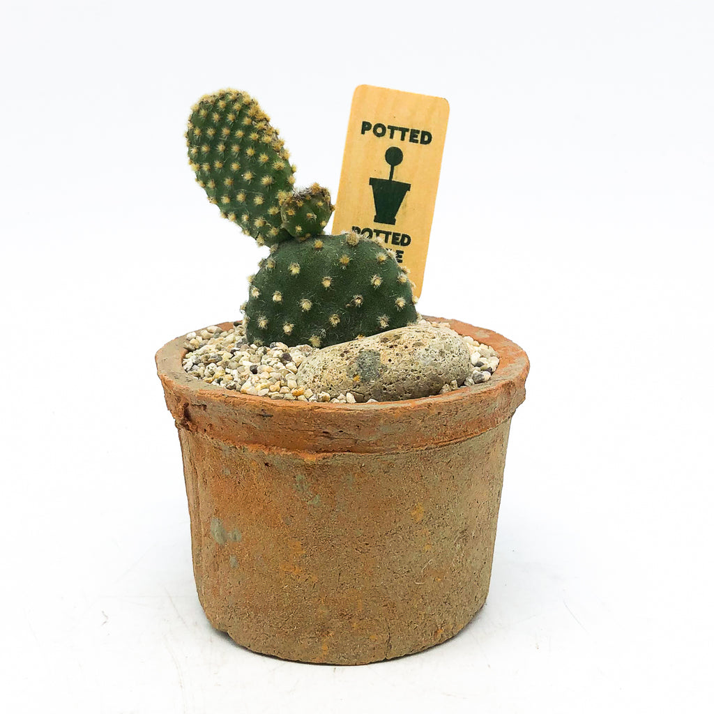 Small terra-cotta Egyptian planter with a cactus and rock