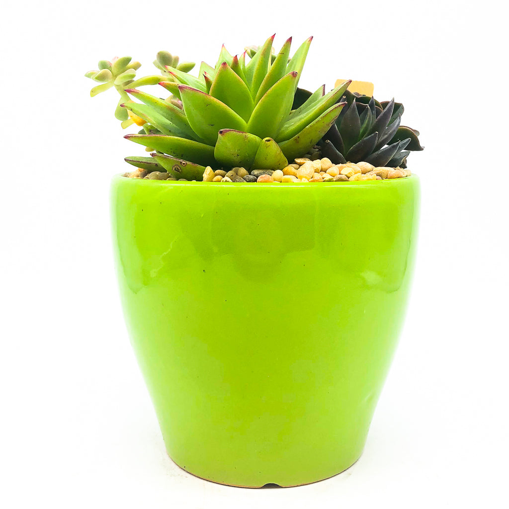 Glazed green planter with assorted succulents