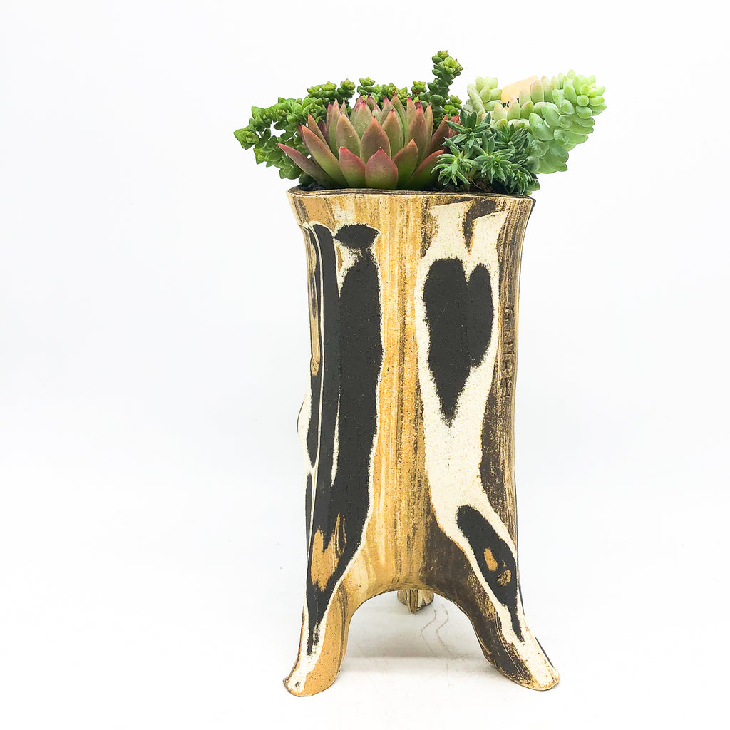 Gimbel Chocolate Marbled Leggy Log with assorted succulents