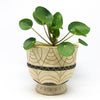 Terra-cotta Debossed Footed Planter with a chinese money tree