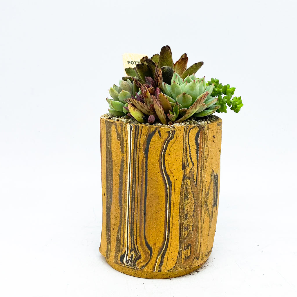 Gimbel Chocolate Little Log with assorted succulents