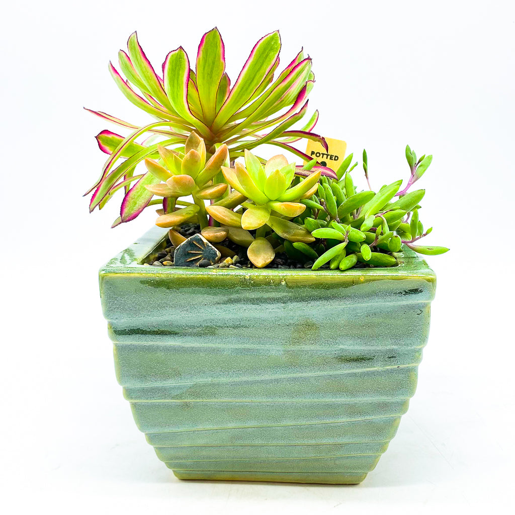 Square green glazed planter with assorted succulents