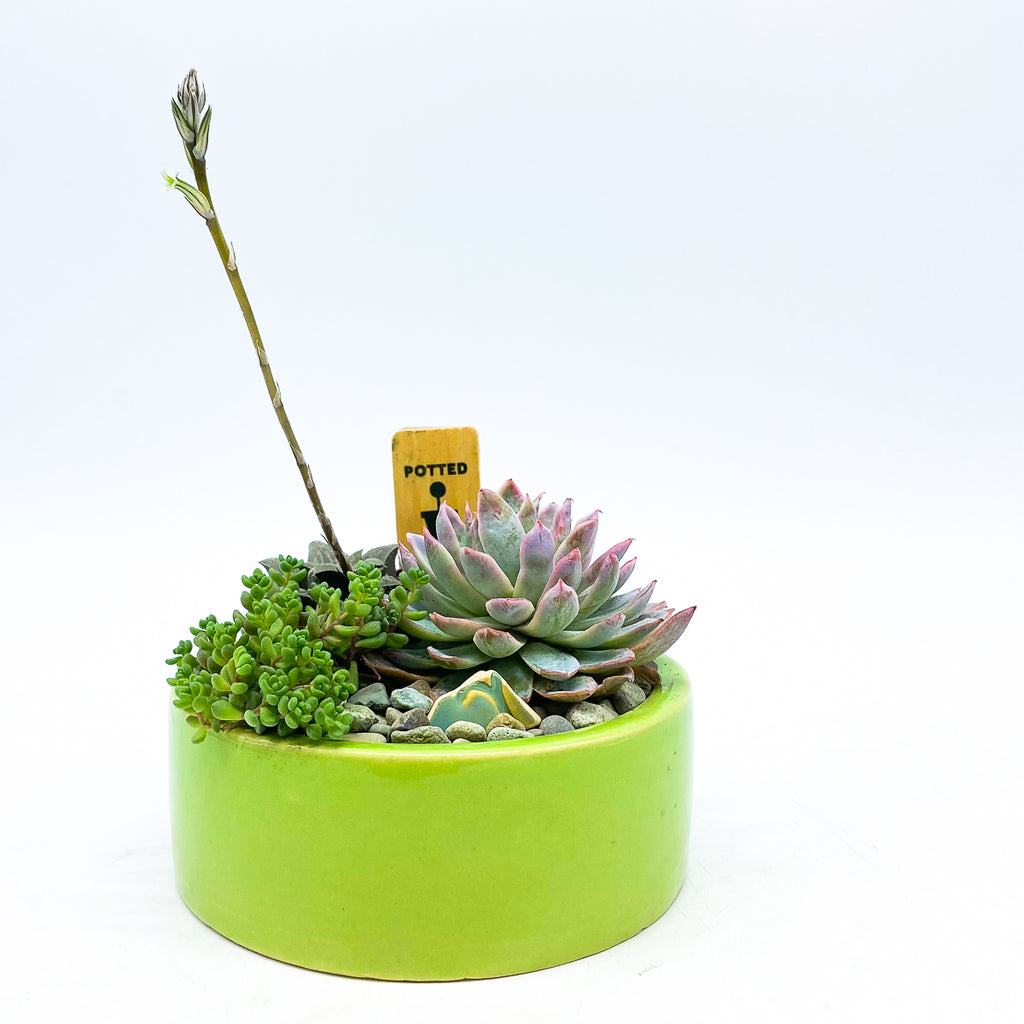 Green circular planter with assorted succulents