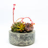 Cement circular planter with assorted succulents