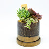 Minute Planter in mocha with assorted succulents