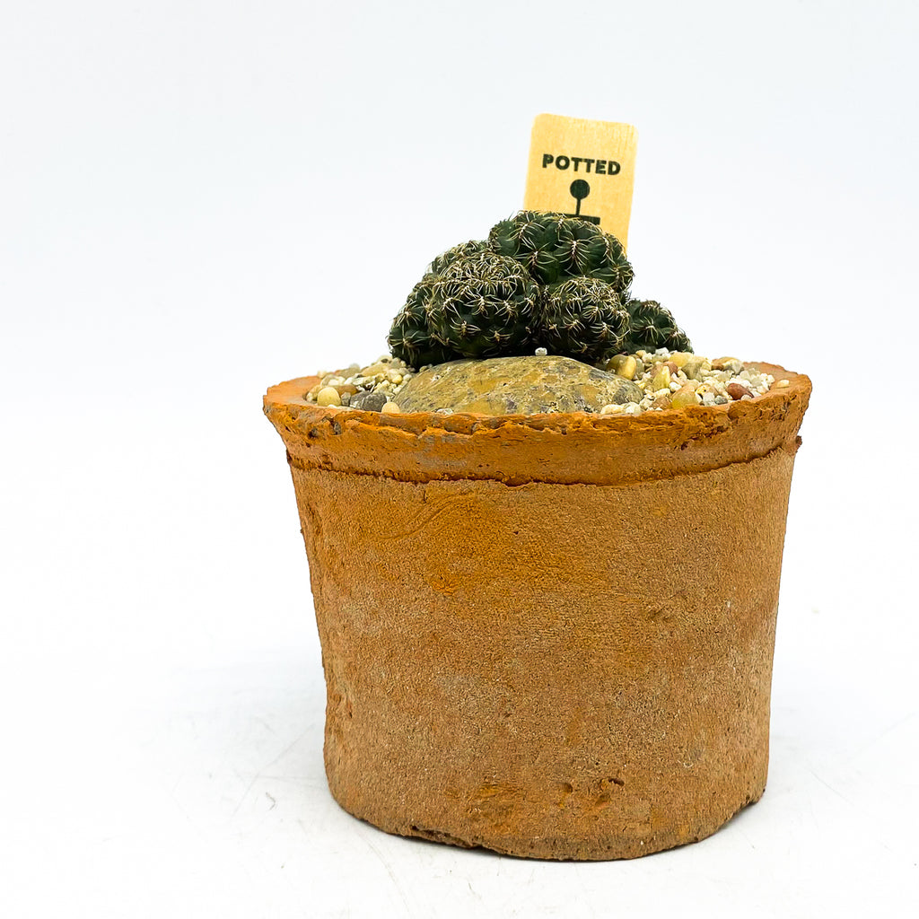 Egyptian terra-cotta planter with a cactus