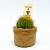 Small Egyptian terra-cotta planter with a cactus