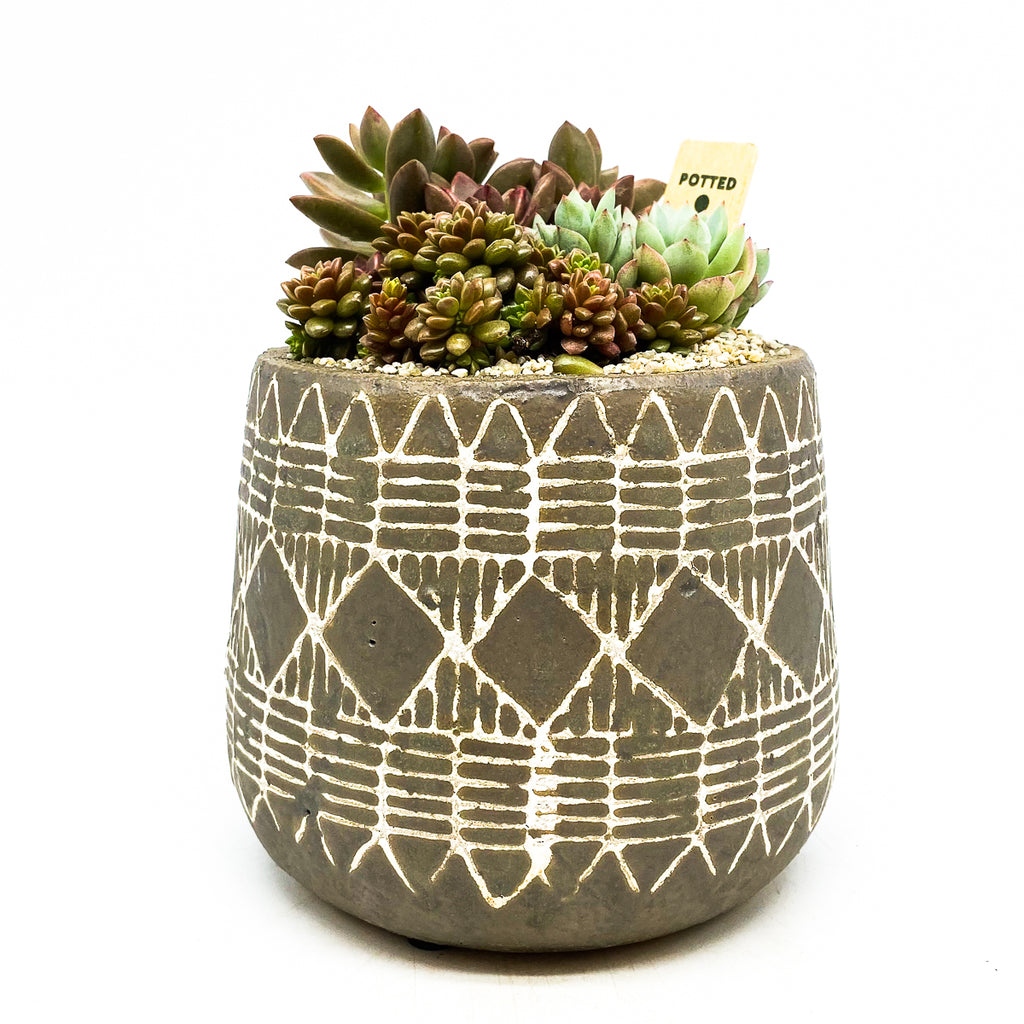 Naima pot with assorted succulents and rocks