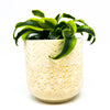 Indo Speckled Cream Pot with a dracaena tornado