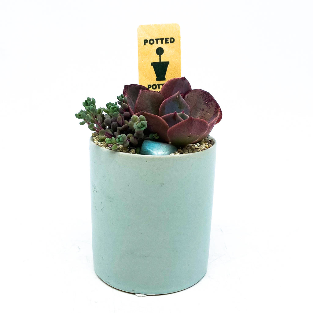 Light blue planter with assorted succulents
