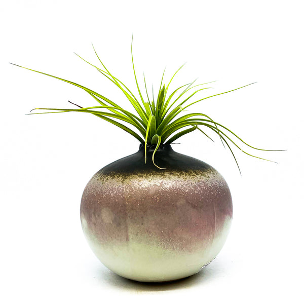 Lavender Graphite Bud Vase with an air plant