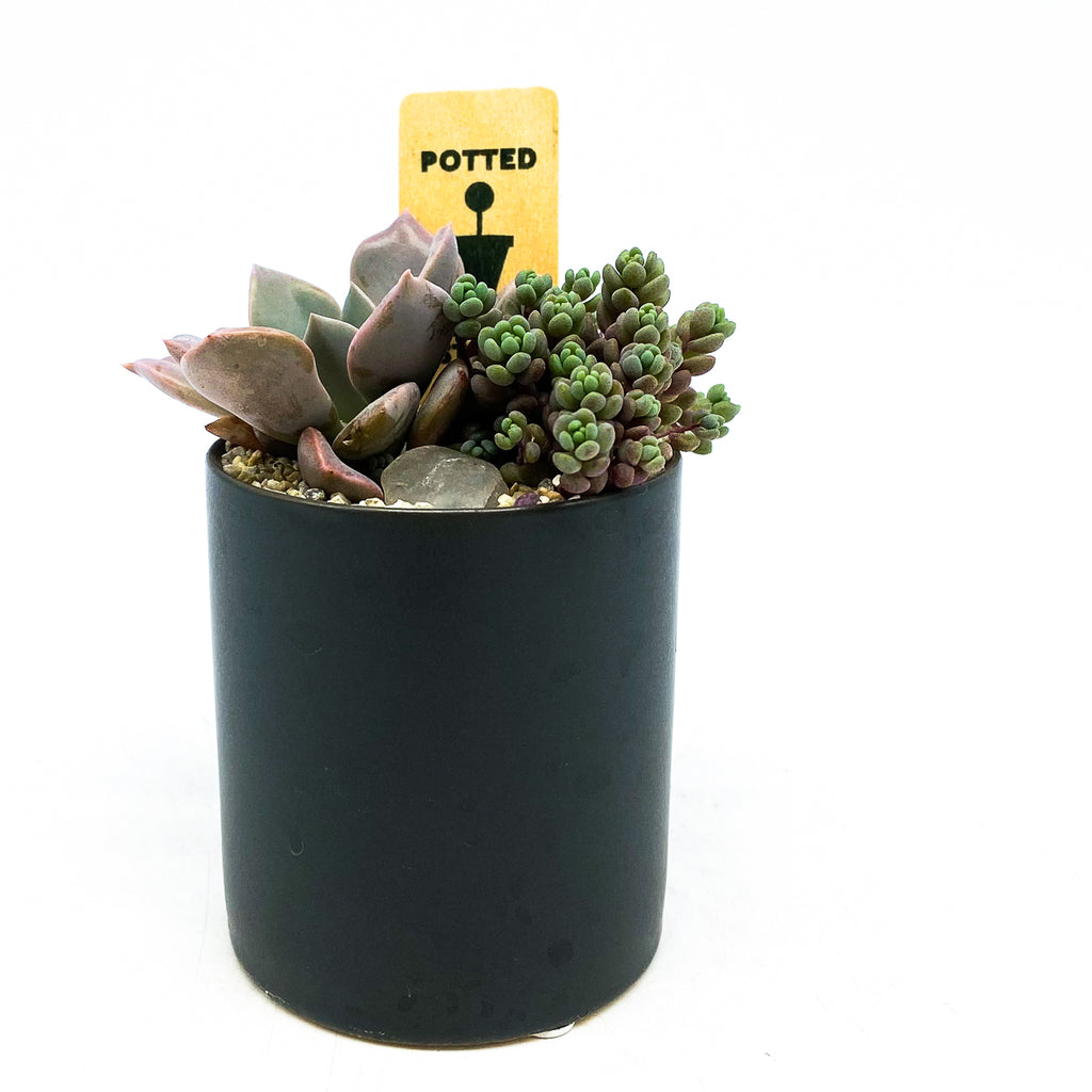Matte dark grey planter with assorted succulents