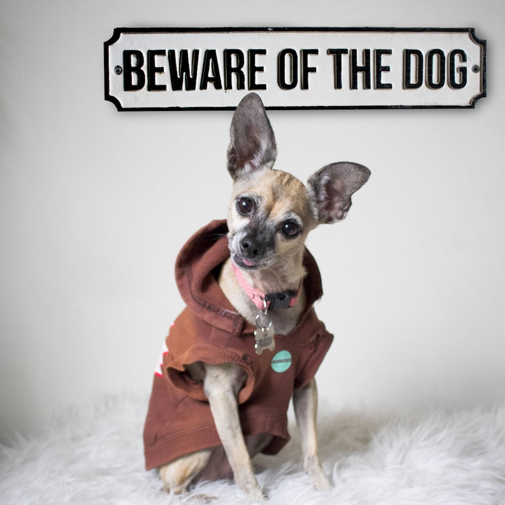 Beware of Dog Sign with cute Chihuahua dog in a sweater.