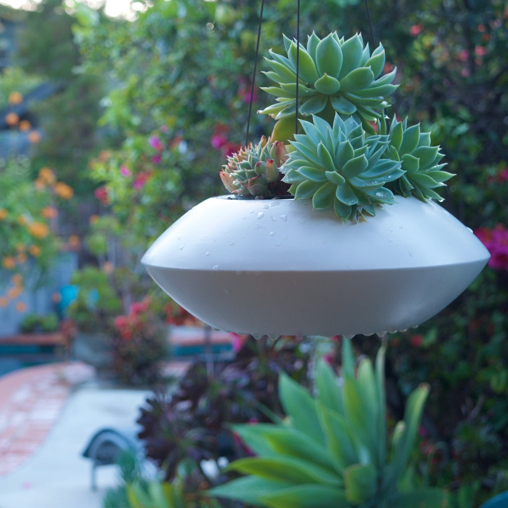 White Orbit Planter hanging in a garden near a pool with succulents.