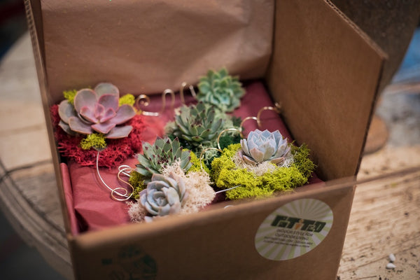 A box of handmade succulent ornaments made at Potted's workshop.