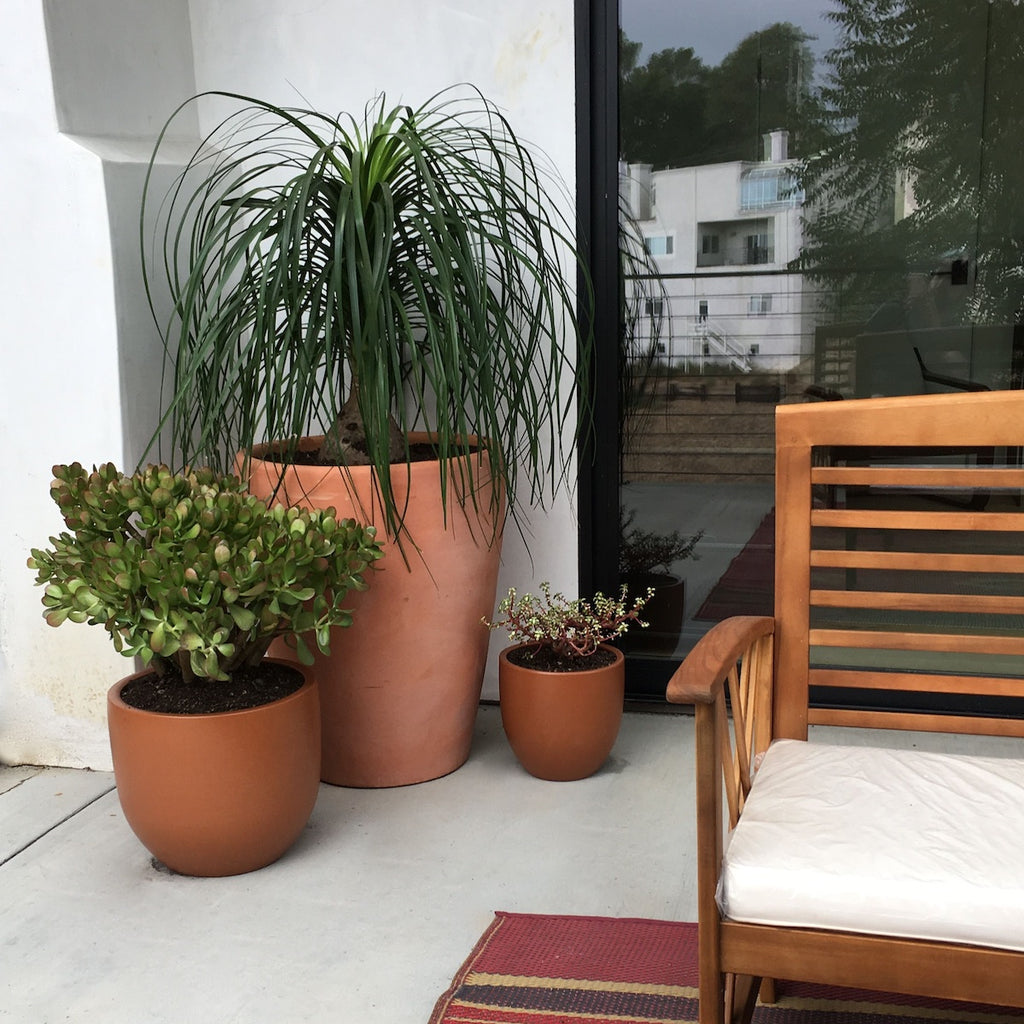 Plant grouping on a private patio.