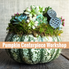 Succulent filled pumpkin centerpiece.