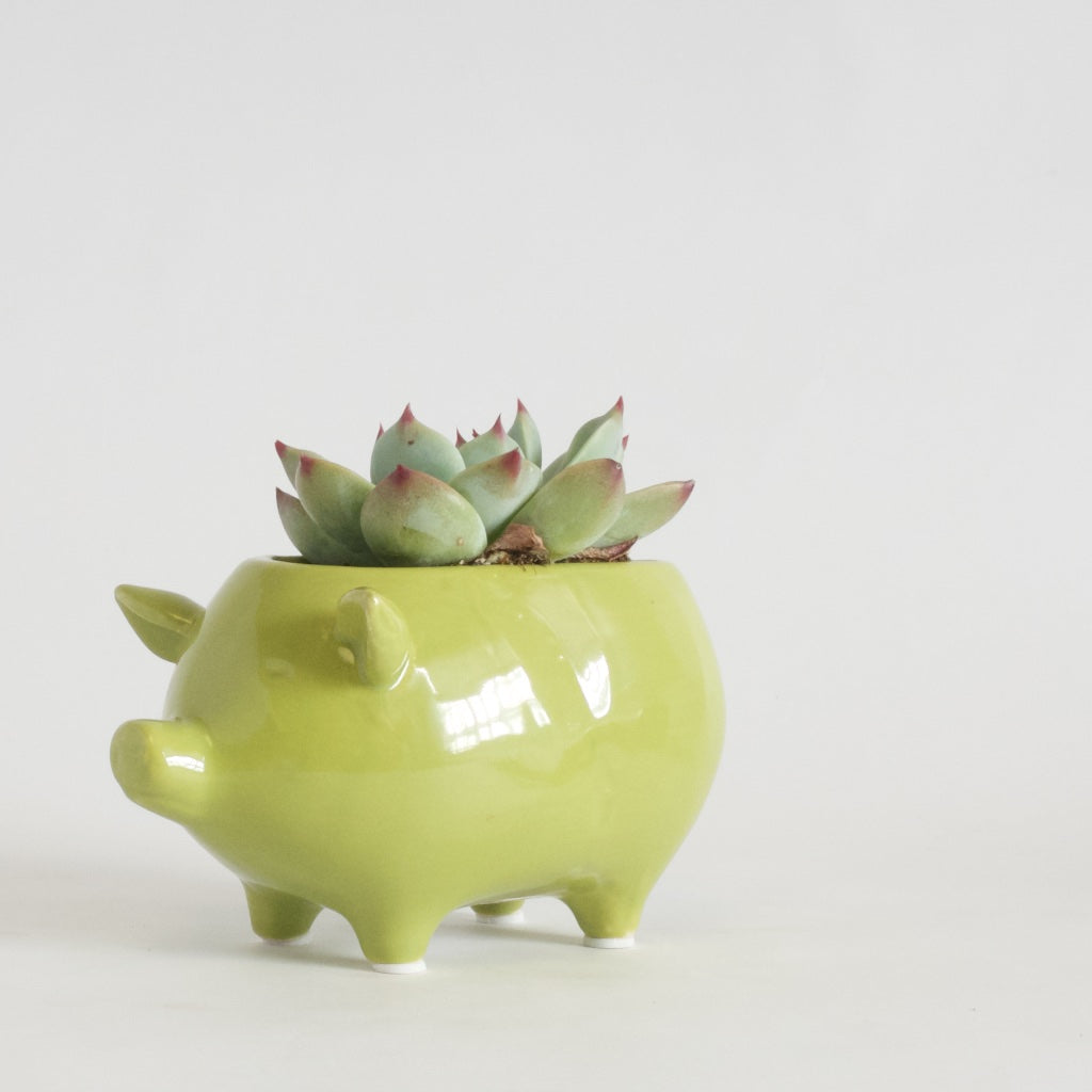 Piggy planter in chartreuse.