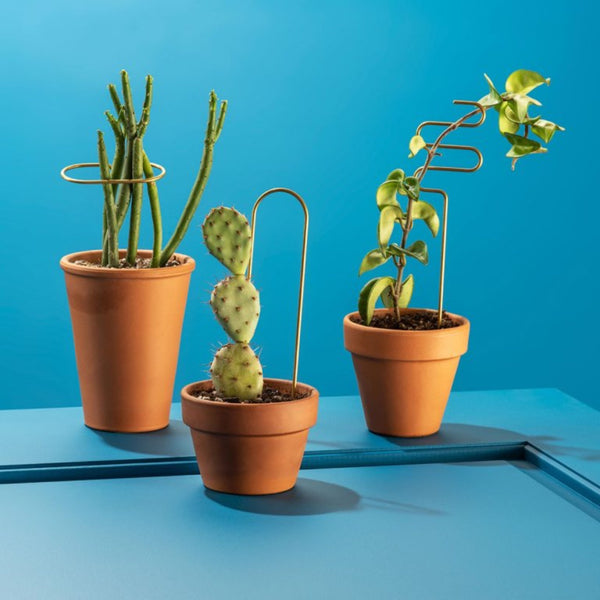 Three terra cotta planters with plants and brass plant stakes.