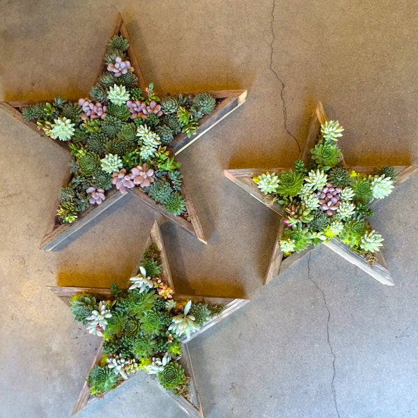 Succulent filled star shaped wall planter.