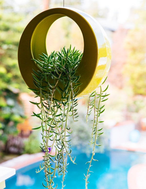 Hanging Chartreuse Circle Pot with trailing succulents high above a dark blue pool.